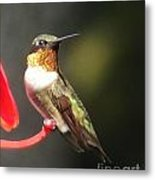 Ruby Throated Hummingbird 2 Metal Print