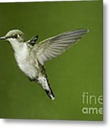 Ruby-throated Hummingbird At Flower Metal Print