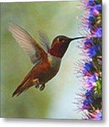 Ruby Throated Hummingbird Digital Art Metal Print