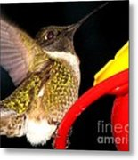 Ruby-throated Hummingbird Landing On Feeder Metal Print