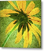 Rudbeckia On Cement Metal Print