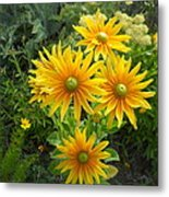 Rudbeckias With Green Centers Metal Print