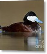 Ruddy Duck On Still Pond Metal Print