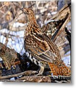 Ruffed Grouse On Alert Metal Print