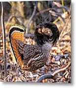 Ruffed Grouse Ruffed Up Metal Print