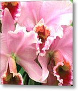 Ruffles And Flourishes Cattleya Orchids Metal Print