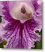 Ruffly Purple Orchid Closeup Metal Print
