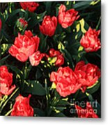 Ruffly Red Tulips Square Metal Print