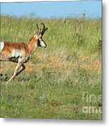 Run  Light Buck  Run Metal Print