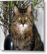 Runcius- Palm Sunday Kitty Metal Print