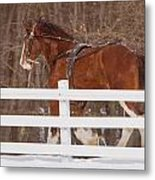 Running Clydesdale Metal Print
