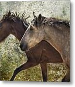 Running Free - Pryor Mustangs Metal Print