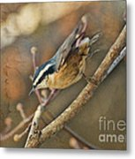Runway Clear For Takeoff   Redbreasted Nuthatch Metal Print