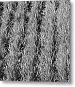 Rural America Black And White Metal Print