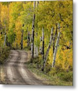 Rural Forest Service Road Metal Print