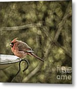 Rustic Cardinal Metal Print