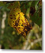 Rusty Leaf Metal Print