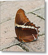 Rusty Tipped Page Butterfly Metal Print