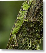 Sabah Eyebrow Lizard Mt Kinabalu Np Metal Print by Ch'ien Lee
