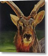 Sable Antelope Metal Print