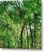 Sacred African Rainforest Metal Print
