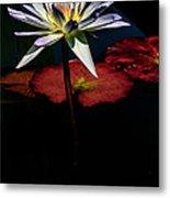 Sacred Water Lilies Metal Print