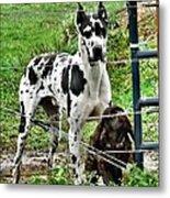 Sad Dogs Metal Print