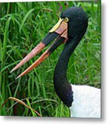 Saddle Billed Stork-00139 Metal Print