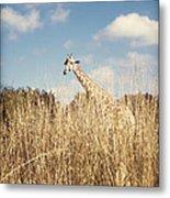 Safari Giraffe  Metal Print
