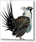 Sage Grouse  Metal Print by Anonymous