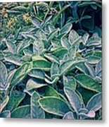 Sage In The Garden Metal Print