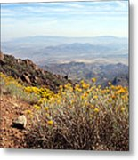 Sage Metal Print by Lester Phipps