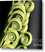 Sago Palm Leaf - 3 Metal Print
