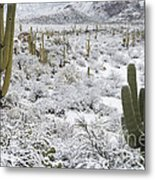 Saguaro Cacti After Rare Desert Metal Print