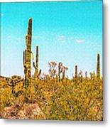 Saguaro Cactus In Organ Pipe Monument Metal Print