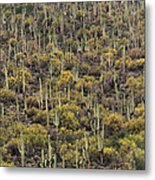 Saguaro Forest At The Foot Of Four Peaks Metal Print
