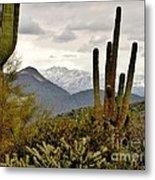 Saguaro Sentinels Metal Print