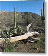 Saguaro Skeleton Saguaro National Park Az  Metal Print