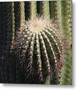 Saguaro With New Arm Metal Print