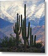 Saguaros And Snow Metal Print
