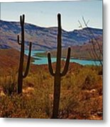 Saguaros In Arizona Metal Print