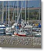 Sailing Sailing Metal Print