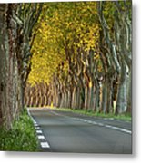 Saint Remy Trees Metal Print