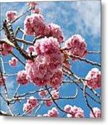 Sakura Tree Blossoms Metal Print