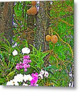 Sala Tree And Orchids At Buddhist University In Chiang Mai-thail Metal Print