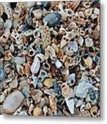 Sallie's Sea Shells Metal Print