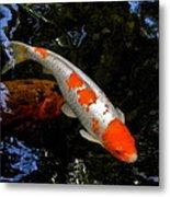 Salmon And White Koi Metal Print