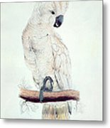 Salmon Crested Cockatoo Metal Print