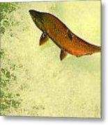 Salmon Run 3 Metal Print by Mamie Gunning
