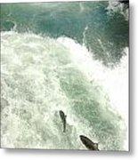 Salmon Run 4 Metal Print by Mamie Gunning